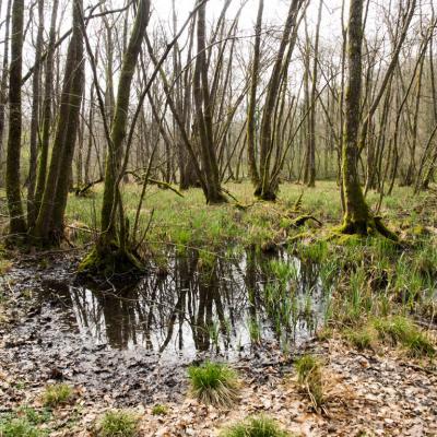 Les mares forestières et la voie romaine