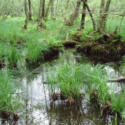 La forêt autour de Liesle