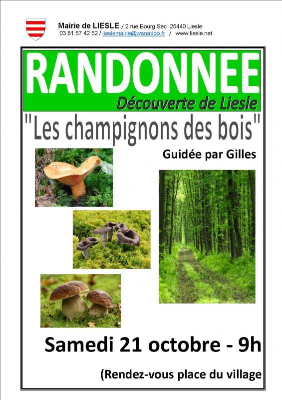 Affiche randonnee champignons