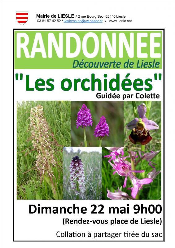 Affiche randonnee orchidees
