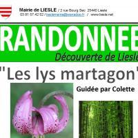 Copie de affiche randonnee lys martagon 17