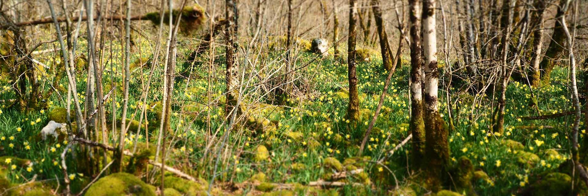 Liesle: Sa forêt...